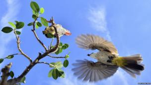 Mother bird feeding baby bird