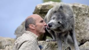 Pierre Cadeac trains a wolf
