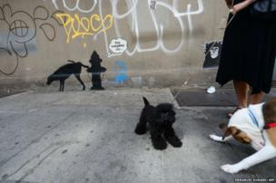 Two dogs play in front of a street art graffiti