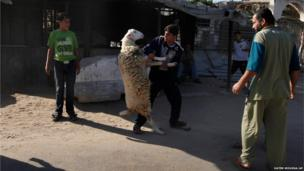 A Palestinian man struggles with a sheep