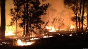 Trees burning in the blaze of forest fire. Photo: Amy Irwin