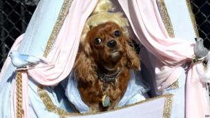 "A dog dressed as ""Cinderella"" participates in the 23rd Annual Tompkins Square Halloween Dog Parade on October 26, 2013 in New York City. Thousands of spectators gather in Tompkins Square Park to watch hundreds of masquerading dogs in the countrys largest Halloween Dog Parade."