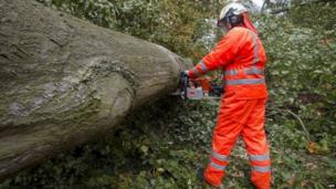 A Belgian fire fighter removes a tree at the Terheidedreef in Schoten after it fell and blocked a road (28 October 2013)