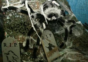 A massive spider in a web