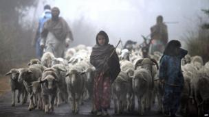 Young Indian Gujjar nomads walk with their flock through thick fog on the outskirts of Jammu