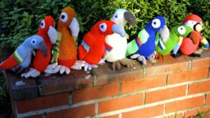 Eight parrots squawking