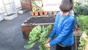 Robbie at Shettleston Community Garden in Glasgow