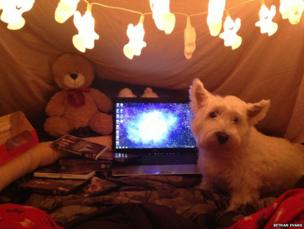 Terrier and a computer