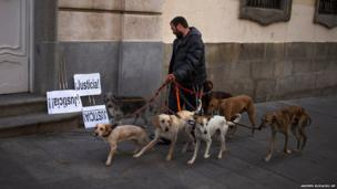A man walks dogs in Madrid, Spain