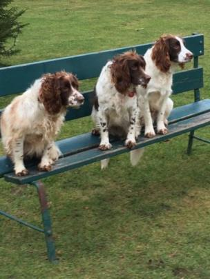 Three dogs sitting on a bench