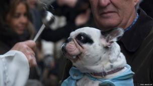 A dog is anointed outside the Saint Anton church in Madrid