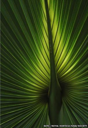 A close-up of a leaf