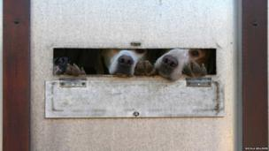 Dogs in trailer