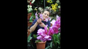 "An employee poses with a Phalaenopsis ""Diamond Sky"" orchid"
