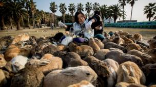 Two tourists sit and feed hundreds of rabbits at Okunoshima Island on February 24, 2014