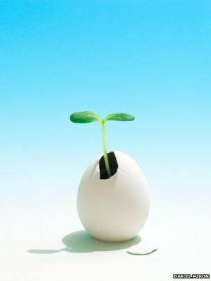 A plant growing from an egg