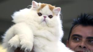 A man presents a Persian cat