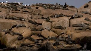 Fur seals rest at Isla de Lobos