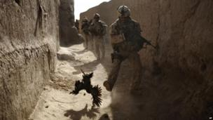 A Canadian soldier chases a chicken seconds before he and his unit are attacked by grenades in Salavat, Afghanistan. Photo: 2010