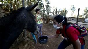 A local gives water to a donkey in the area ravaged by fire in Valparaiso on 13 April 2014
