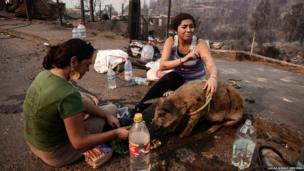 Residents whose home was destroyed by a major fire feed a pig amid the destruction in Valparaiso