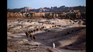 Camel caravan, 1980