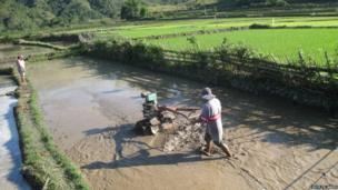 A farmer at work