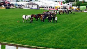 Horses at the Devon County Show