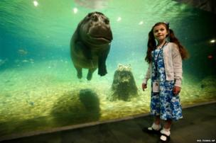 Genny, a 4,000lb hippopotamus, is pictured with Audrey Bruben at the Adventure Aquarium in Camden, New Jersey