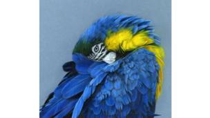 L'Oiseau Bleu by by Corinne Dupeyrat