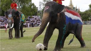 An elephant kicks a ball during a soccer match with Thai students in Thailand's Ayutthaya province. 9 June 2014