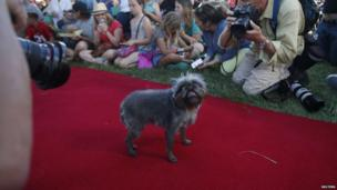 """Monkey, a Brussells Griffon, walks down the red carpet during the 2014 World""""s"""