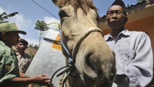 Electoral workers load a ballot box onto a horse as they prepare to distribute ballot boxes to polling stations in remote areas in Tlogosari, East Java, Indonesia, on Tuesday, 8 July, 2014