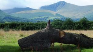An old tree trunk in front of Pen y fan