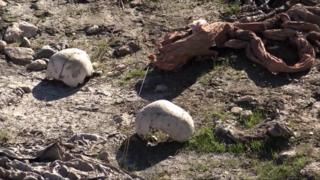 In this image made from video taken on 22 November 2015, skulls remain at the site of a purported mass grave in the city of Sinjar, northern Iraq after it was retaken from Islamic State militants