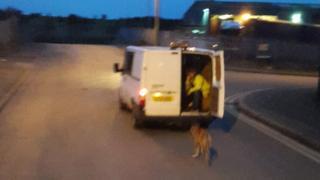 Tan coloured dog dragged behind white transit van