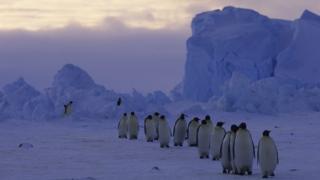 пингвины на леднике ларсена