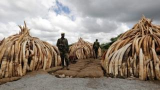 Ivory pyres in Nairobi National Park
