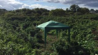 Plants on disused private land on Lower Marsh Lane, in Kingston