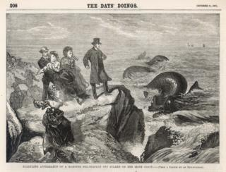 "The image of the ""extraordinary marine visitor"" appeared in the Victorian publication, The Days' Doings"