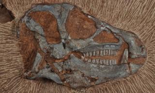 Heterodontosaurus tucki
