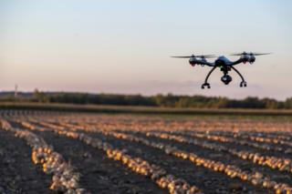 Drone flying over onion field