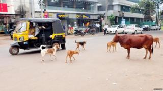 Stray dogs in Kerala