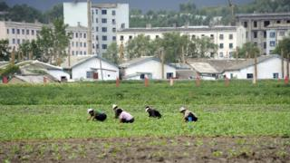 Farmers tending to their field in North Korea