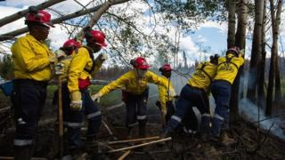 A group of South African firefighters work to uproot a tree as they remove hot spots from a massive wildfire outside of Fort McMurray, Alberta, Canada - 2 June 2016