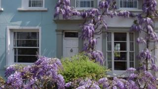 Wisteria on a house (Image: BBC)
