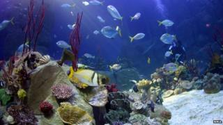 Coral seas aquarium tank (Image courtesy of the National Marine Aquarium)
