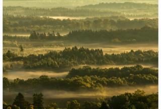 Forest and Mist - Hakan Liljenberg / www.igpoty.com