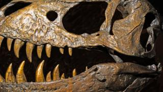 Major reorganization suggests dinosaurs might have 'UK origin'