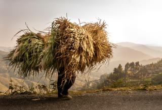 Bringing Home the Fodder by Evelyn Nodwell